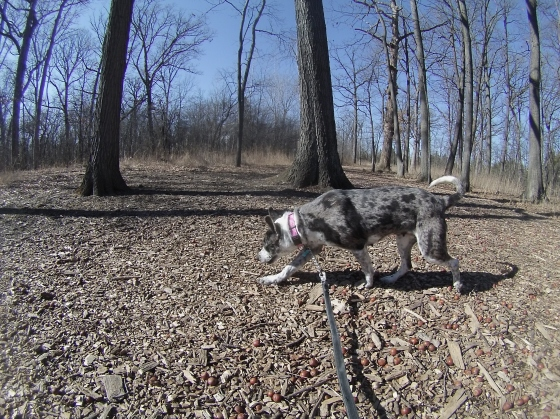 Orphans of the Storm Dogs: Maya Heeler 1