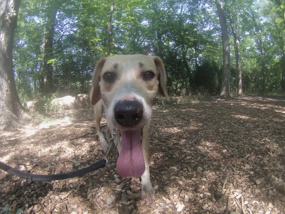 Orphans of the Storm Dogs: Cooper Mountain Cur Lab 2