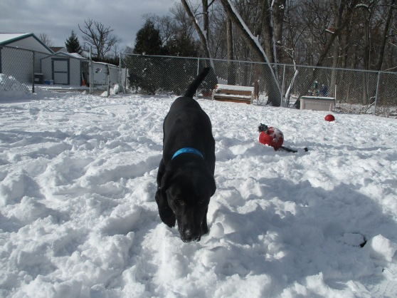 Orphans of the Storm Dogs: Boulder 2