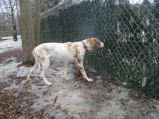 Orphans of the Storm Dogs: Dumplin' 1