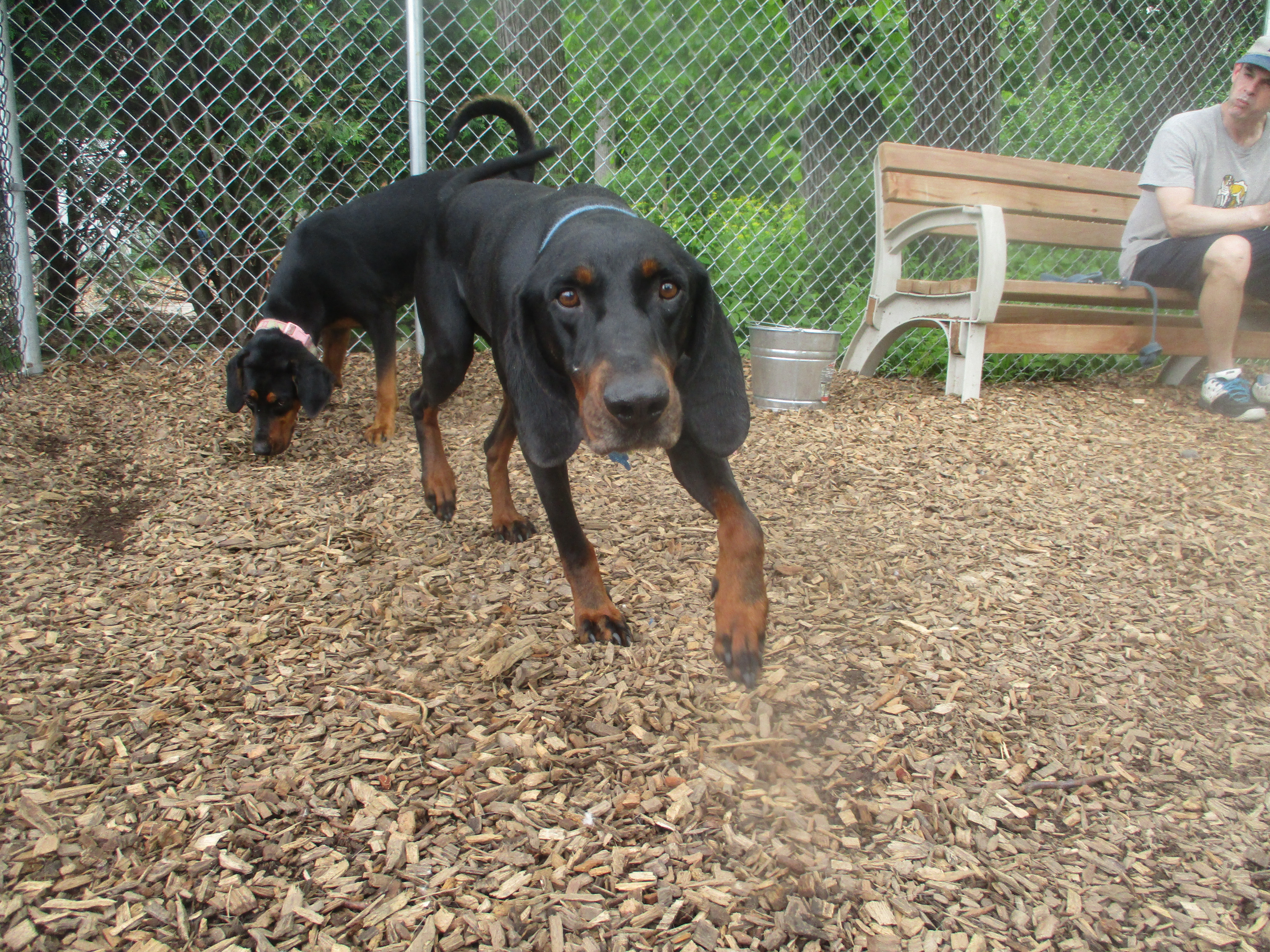 Orphans of the Storm Dogs: Jackson Hound 1