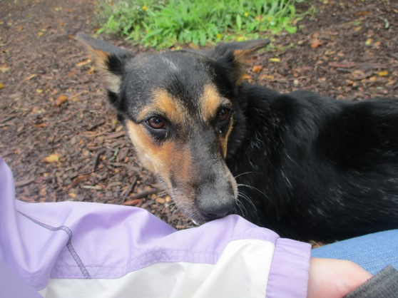 Orphans of the Storm Dogs: Sadie Heeler 1