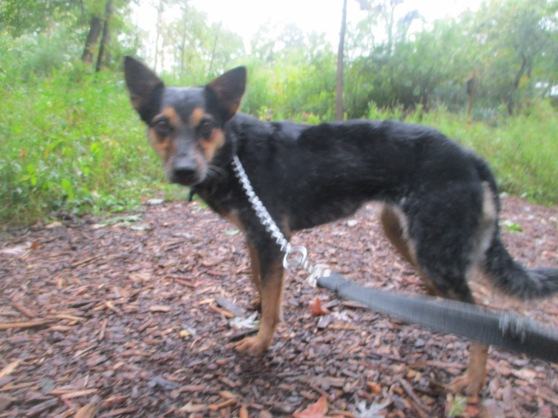 Orphans of the Storm Dogs: Sadie Heeler 2