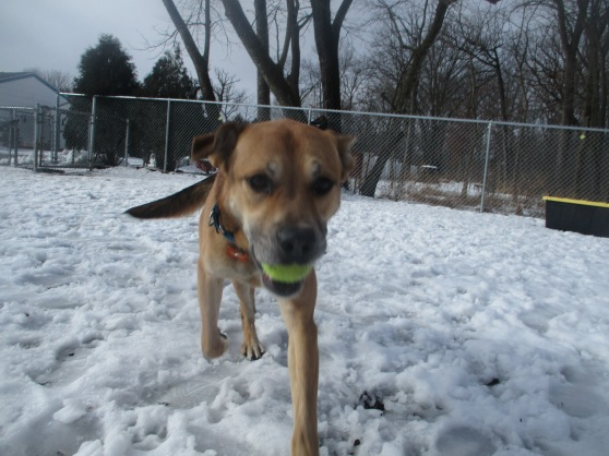 Orphans of the Storm Dogs: Scooby Shep Lab 1