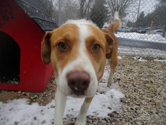 Orphans of the Storm Dogs: Duke Feist ACD 1