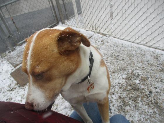 Orphans of the Storm Dogs: Duke Feist ACD 2